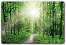 Wandbilder - Glasbild Sunny Forest
