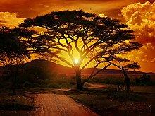 wandmotiv24 Fototapete Afrika Sonnenuntergang