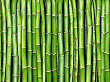 wandmotiv24 Fototapete Bambuswand KT54 Größe: 350x260cm Tapete Bamboo China Natur