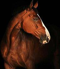 wandmotiv24 Fototapete braun weißes Pferd, M 250