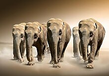 wandmotiv24 Fototapete Elefant Afrika L 300 x 210