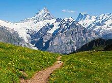 wandmotiv24 Fototapete Sommerwiese in den Alpen