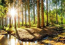 wandmotiv24 Fototapete Sonnenschein im Wald mit