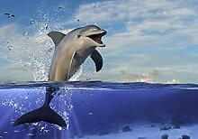 wandmotiv24 Fototapete springender Delfin Wasser,
