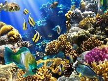 wandmotiv24 Fototapete Unterwasser KT11 Größe: 350x260cm Tapete Fische Meer Koralle