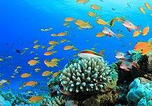 wandmotiv24 Fototapete Unterwasserwelt Riff S 200