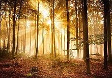 wandmotiv24 Fototapete Wald am Morgen Größe: 400