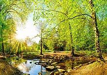 wandmotiv24 Fototapete Wald im Sommer mit Bach und