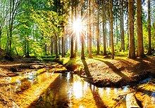 wandmotiv24 Fototapete Wald mit Fluss im Frühling