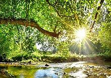 wandmotiv24 Fototapete Wald mit Fluss, L 300 x 210