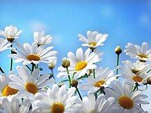 wandmotiv24 Fototapete weisse Blumen Größe: 350