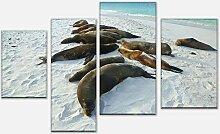 wandmotiv24 Leinwandbild Galapagos Seelöwen