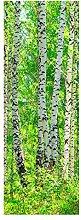 wandmotiv24 Türtapete Birkenwald 70 x 200cm (B x