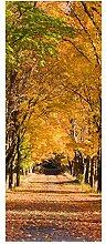 wandmotiv24 Türtapete Herbstallee 80 x 200cm (B x