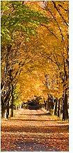 wandmotiv24 Türtapete Herbstallee 90 x 200cm (B x