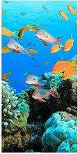 wandmotiv24 Türtapete Riffleben Unterwasser 100 x