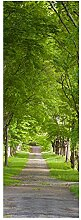 wandmotiv24 Türtapete Sommerallee 70 x 200cm (B x