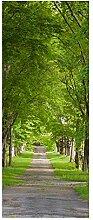 wandmotiv24 Türtapete Sommerallee 80 x 200cm (B x