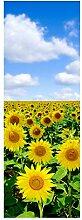 wandmotiv24 Türtapete Sonnenblumenfeld 70 x 200cm