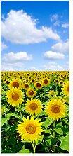 wandmotiv24 Türtapete Sonnenblumenfeld 90 x 200cm