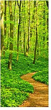 wandmotiv24 Türtapete Waldpfad 90 x 200cm (B x H)