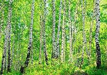 wandmotiv24 Vliestapete Birkenwald Größe: 400 x