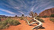 wandmotiv24 Vliestapete Wüstenlandschaft USA
