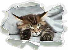 Wandtattoo Baby-Katze rote Bettdecke East Urban
