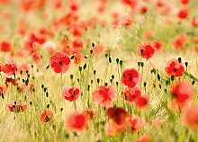Wandtattoo Mohnblumen MONET'S Fototapete Poster-Tapete (254 x 183 cm, rote Blumen