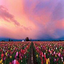Wapel Natur Landschaft Hd Fototapete Tulpen Bei