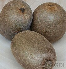 weibliche Kiwi Hayward 60-80cm - Actinidia