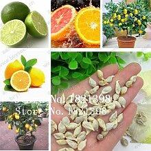 Weiß: Bulk Lemon Seeds, Limettensamen, 100%