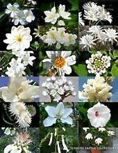 Weiße Blumen-Pflanzen-Mix Exotische Garten-Baum