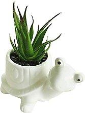 Weiße Schildkröte Keramik Sukkulente Pflanzer