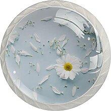 Weißes Gänseblümchen auf himmelblauem