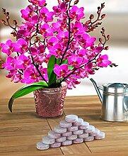 Wenko Düngemittel Tabs für Orchideen, 20-er