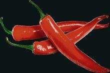 WENKO Küchenrückwand Hot Peperoni