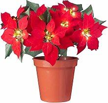 WeRChristmas Blumentopf, Weihnachtsstern,