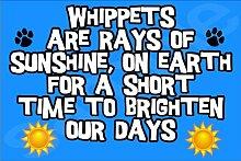 Whippets sind Strahlen Sonne, auf der Erde für kurze Zeit auf unsere Tage Hund–Jumbo Magnet als Geschenk/Geschenk
