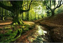 Wiedemann BILD Landschaft & Natur, Bäume