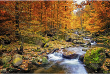 Wiedemann BILD Landschaft & Natur, Herbst ,