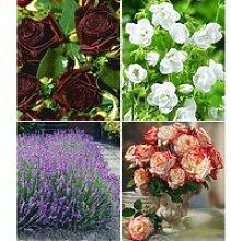 Winterhartes Gartenbeet 'Rosen & Stauden'