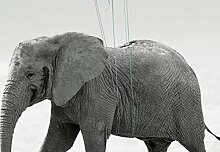 Wizard + Genius 5012-4V-1 Fototapete Elephant und