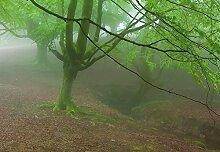 Wizard + Genius 5079-4P-1 Fototapete Foggy Fores