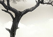 Wizard + Genius 5084-4P-1 Fototapete Giraffe Safari