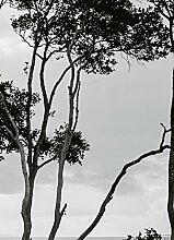 Wizard + Genius 5095-2P-1 Fototapete Trees In The