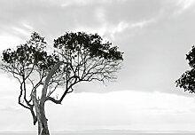 Wizard + Genius 5095-4P-1 Fototapete Trees In The