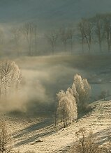 Wizard + Genius 5102-2P-1 Fototapete Frosty Forest