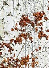 Wizard + Genius 5104-2V-1 Fototapete Birch Forest,