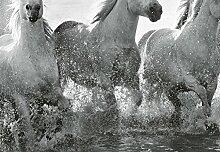 Wizard + Genius 5111-4V-1 Fototapete Horses, Weiß
